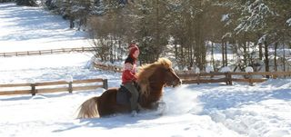Winter horse rides